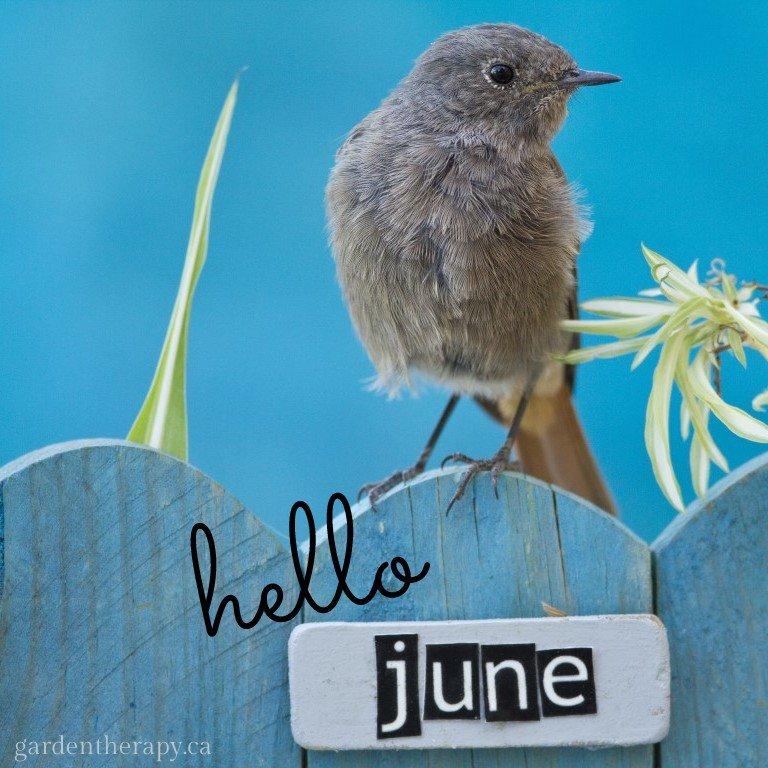 Hello June! https://t.co/1aidosa9sc