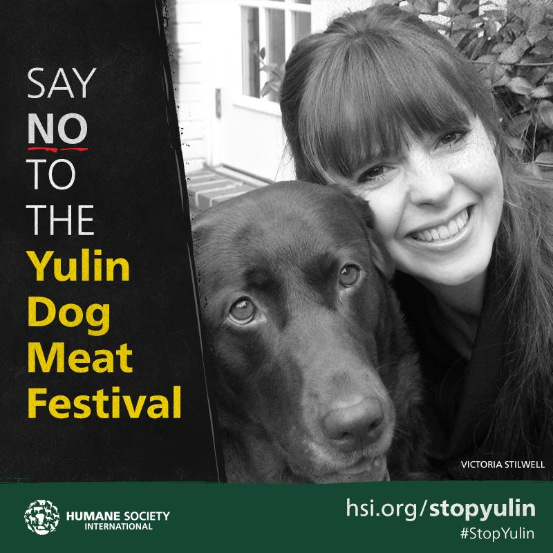 Please join me and @HSIGlobal in stopping the horrible #Yulin dog meat festival: https://t.co/33Q34Lm7Ih https://t.co/UTKQG9hUmk