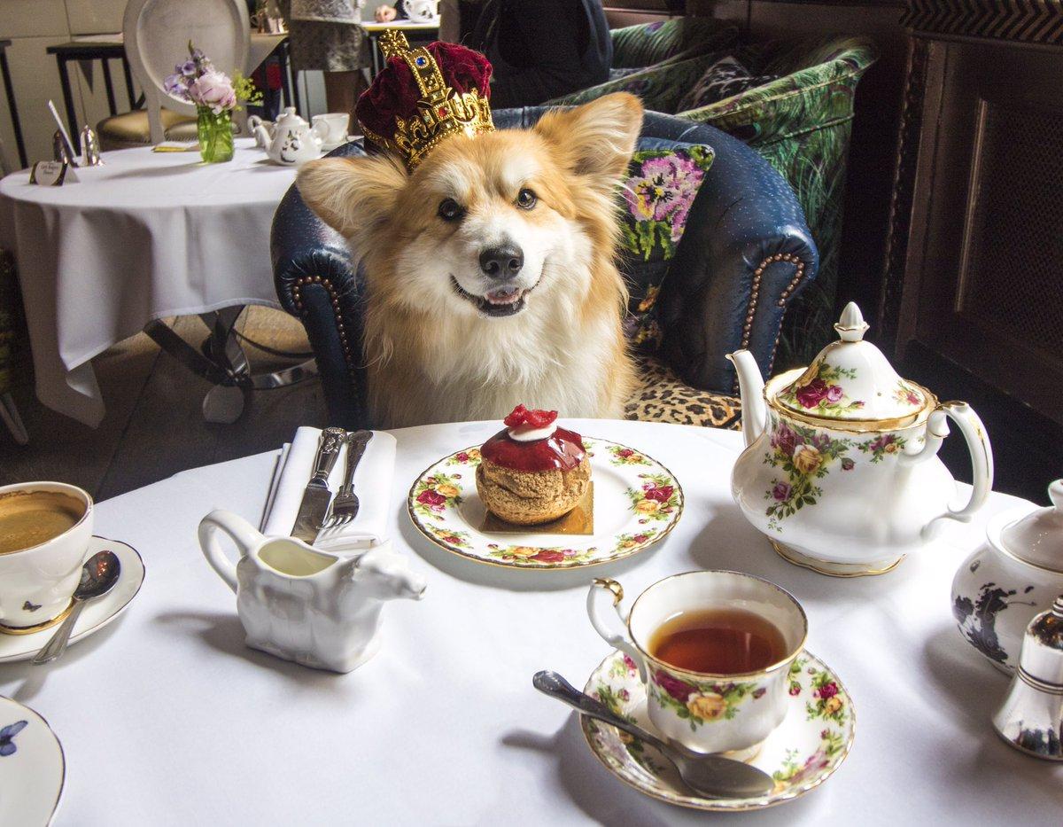 A corgi Royal tea... #Sunday12thjune #queensbirthday #corgiexclusive @lecorgi https://t.co/HMCxBnYe2S