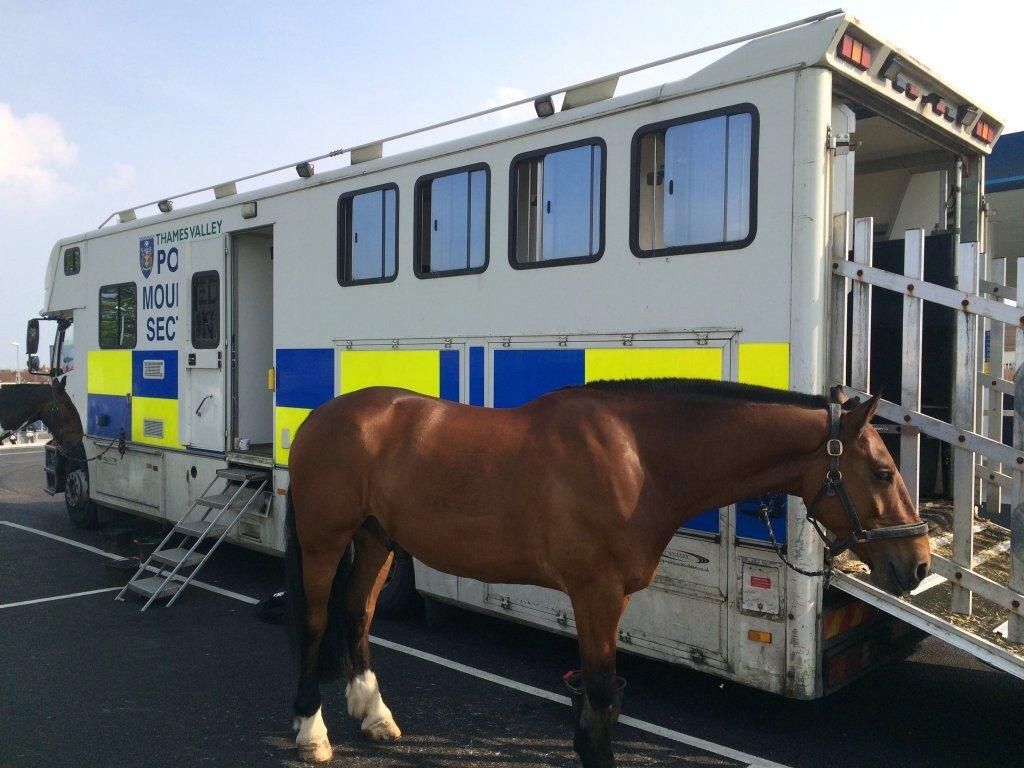 Breaking news #policehorse named Donut captured eating on duty @UKCopHumour @KatieMagnet @NorthSn @InspGadgetBlogs https://t.co/D0nlg8Vvuo