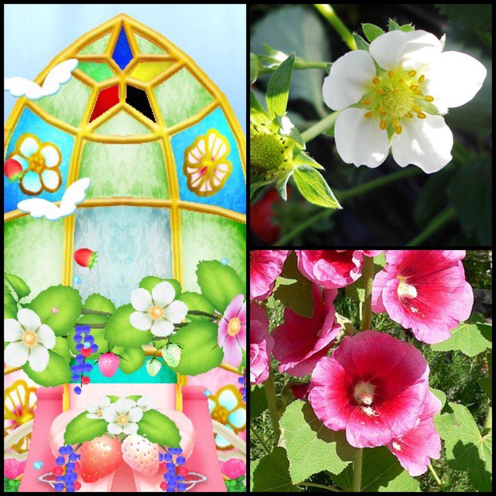 青い苺のステージセットのステンドグラスに描かれてるのって、いちごの花と、タチアオイとか芙蓉とかアオイ科の花なのさっき気付いた https://t.co/1wak0ea9Yn