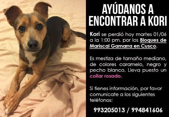 Amiguitos, me piden difundir la búsqueda de esta perrita perdida en Cusco! Rt pls! Gracias!!! https://t.co/HObLPyYBtU