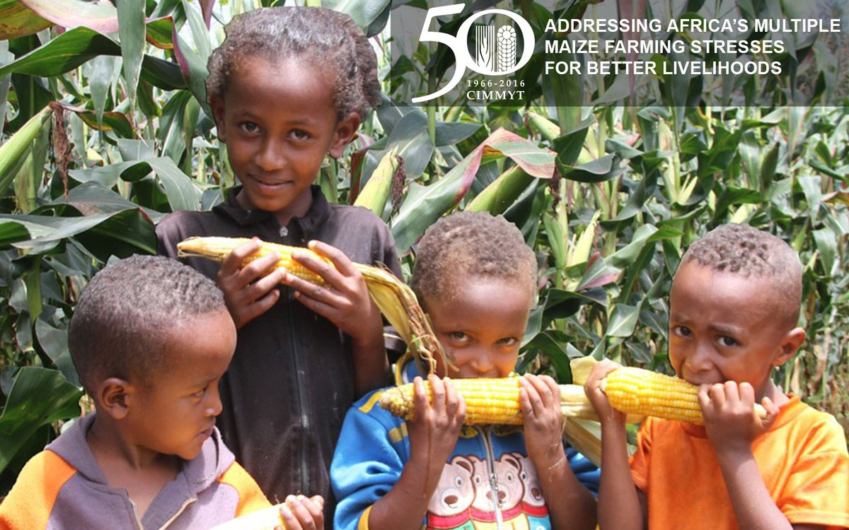 African farmers build resilience thanks to array of improved maize https://t.co/xJ3gTzVMNH #IDB2016 #CIMMYT50 https://t.co/ElXC8lrXHT
