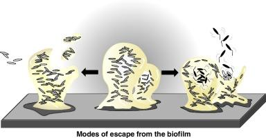 How to escape from a biofilm?: Nice Sunday read fom Current Opinion in Microbiology https://t.co/WZ8yislRYh https://t.co/LMLmWA4glr