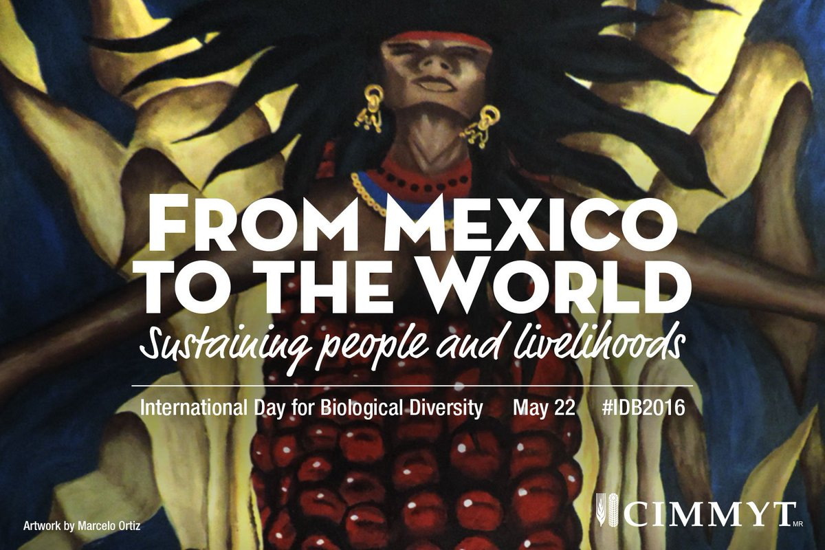 From #Mexico to the world, a story of #Maize #IDB2016 https://t.co/alrHcQjw3A https://t.co/XwvLFSxIKK