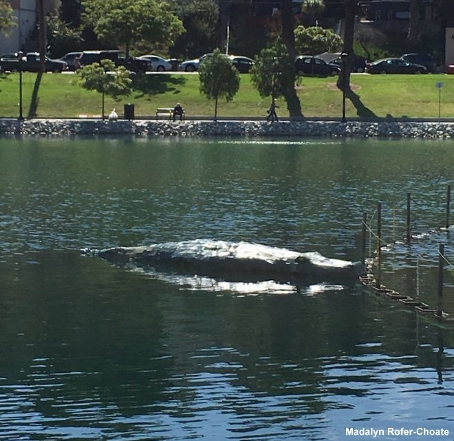 Who put the fake alligator in #EchoPark Lake? https://t.co/8K013my3BJ https://t.co/RFCwE02qD4