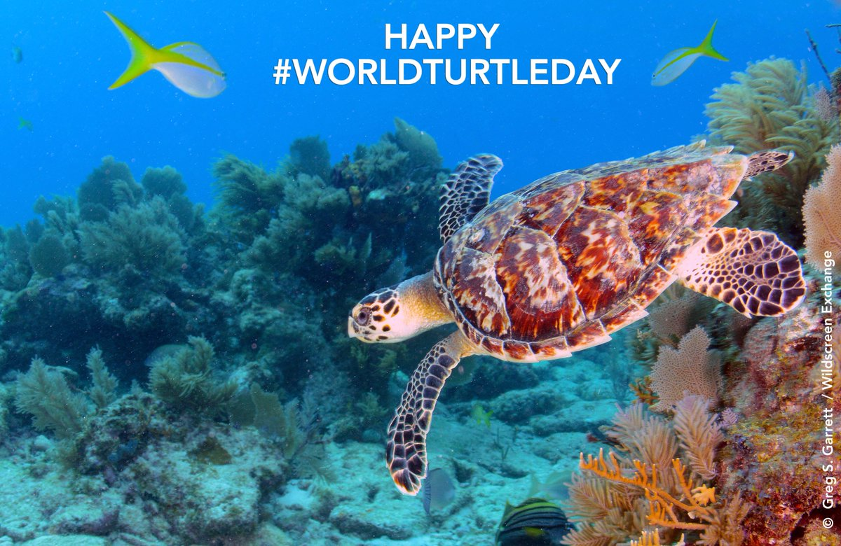 It's #WorldTurtleDay. RT to raise awareness for these #endangered reptiles that have existed for 100 million years https://t.co/qf5mIKaX0u