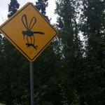 アラスカの道路標識、いったい何に気を付ければいいの・・・ https://t.co/S9QTKw6eA9