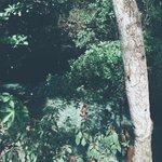 [PICTURE] Gone walkabout, alyciajasmin (via gmoraitis_ on instagram) https://t.co/z3f0XYEhaJ