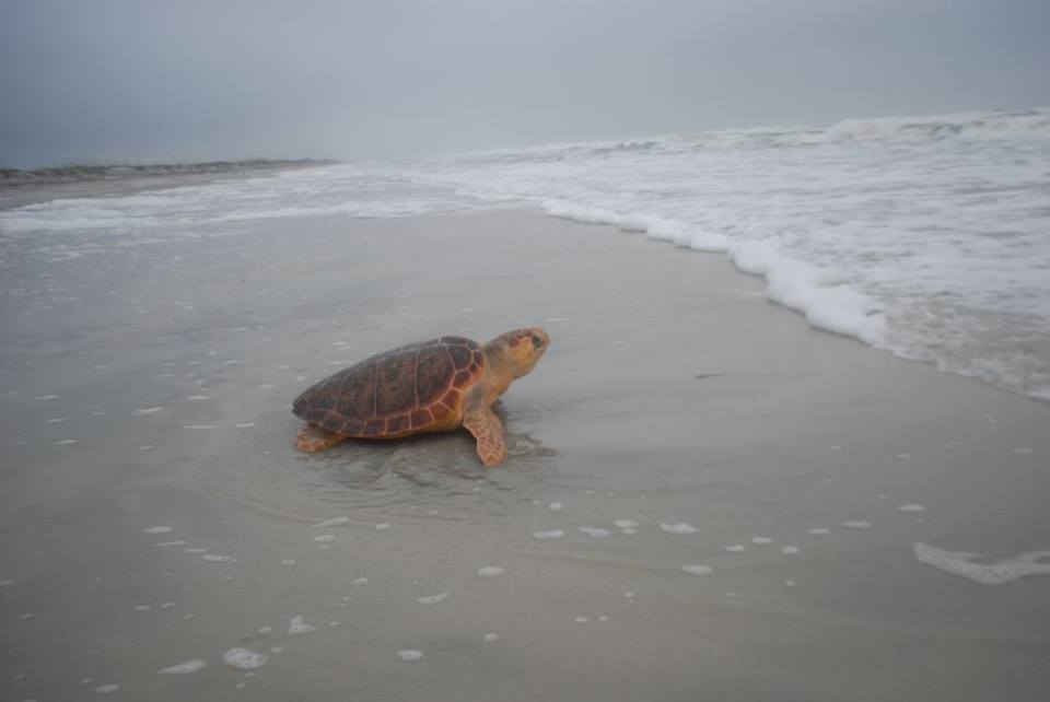 Happy World Turtle Day! Make learning fun with this Sea Turtle Activity sheet via @MyFWC : https://t.co/VEI0FG3Dxw https://t.co/H0XoQwrWC5