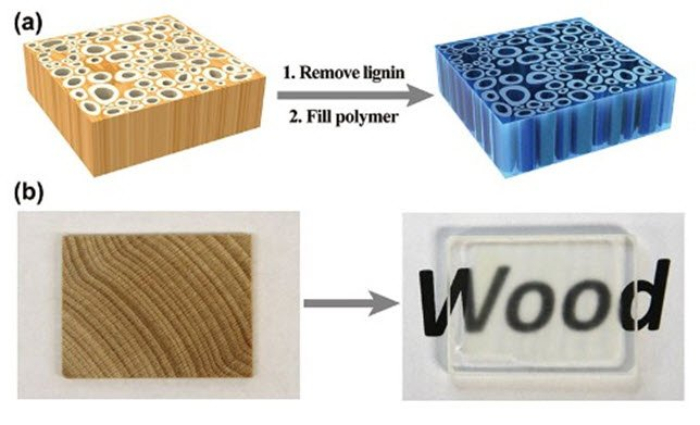 Scientists develop transparent wood by removing lignin https://t.co/6lbbHcMsm8 https://t.co/uAIoRMw3Jx