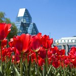 Enjoy Victoria day in the capital, its a gorgeous day in #Ottawa! Tag your photos with #MyOttawa to share with us. https://t.co/1hfPR0DEqS