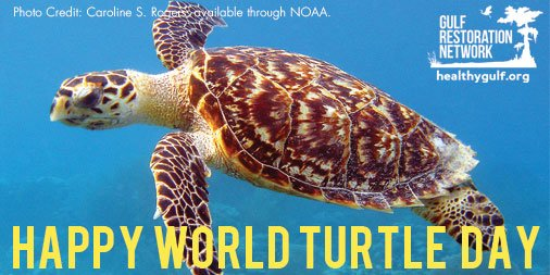 Happy #WorldTurtleDay! 5 of the world's 7 sea turtle species live in the Gulf of Mexico. We love turtles! https://t.co/enDhOWeWMC