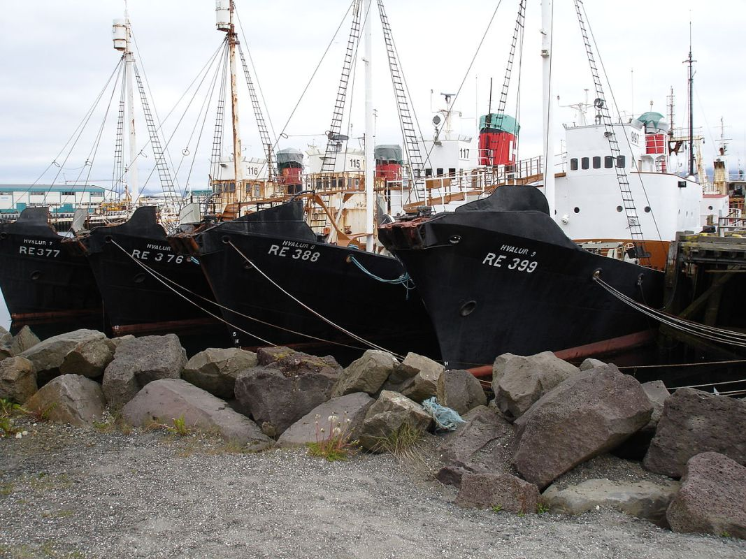 RT @seashepherd: #NEWS: #Icelandic Shops Refusing To Sell #Whale Meat https://t.co/zZwuw1hQwt #SeaShepherd https://t.co/jqQatiIo65