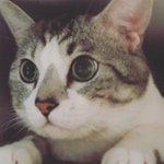 【猫はとにかく箱が好き】でもどうして?専門家が教えてくれた https://t.co/T5t4iMSt2w https://t.co/PIwVeTBrj2