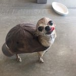 Look at this tortol https://t.co/9o2yi0PTwc