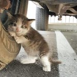 Мужчина увидел под грузовиком котенка и не смог пройти мимо (6 фото) - https://t.co/HGCsBsaUr5  #Котенок #Спасение https://t.co/nIM7EgGfkl