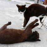 写真グループ・山口政宣記者の #一日一猫 「お待ちくだされ、殿!」 「ええい、放せ、放さんか!」 #猫 #ぬこ #猫写真 https://t.co/acj15ADOLD https://t.co/jm4MYWlfV3