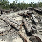 'RM500k fine a pittance for illegal loggers' | New Straits Times | Malaysia General Business Sports and Lifestyle News
