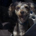 California bill would allow window smashing to save dogs from hot cars https://t.co/uL9ZgDdcdu https://t.co/l22DhrZItT