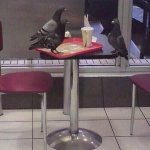Saw a pigeon having a job interview earlier. I hope he got it. https://t.co/doNvqAQRNY