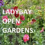BBC's Stuart Dixon to open Lady Bay Open Gardens https://t.co/1mFFsJbgGh #westbridgford #nottingham https://t.co/mBCsIRCeYl