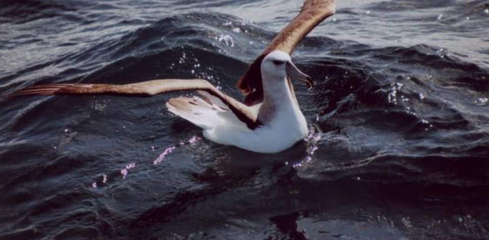 RT @FlysaaIndia: Experience Pelagic birding trips off the coast of South Africa