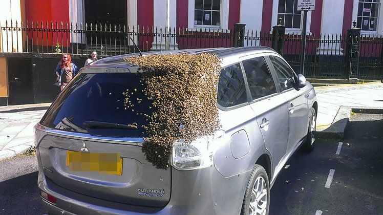 20,000 bees chase car for two days after queen bee gets trapped in boot https://t.co/n7hwEA4xLT