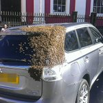 20,000 bees chase car for two days after queen bee gets trapped in boot https://t.co/n7hwEA4xLT https://t.co/tCIAZOgtRw