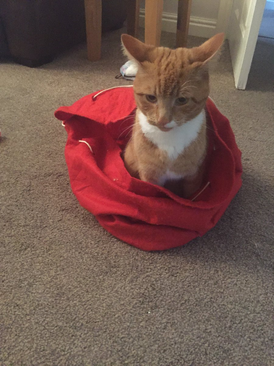 #Missing from #Randlay #Telford Ginger cat answers to Jasper (JJ). Likes to hide in cars/garages. Pls have a look :( https://t.co/8yEXfhP9Zm
