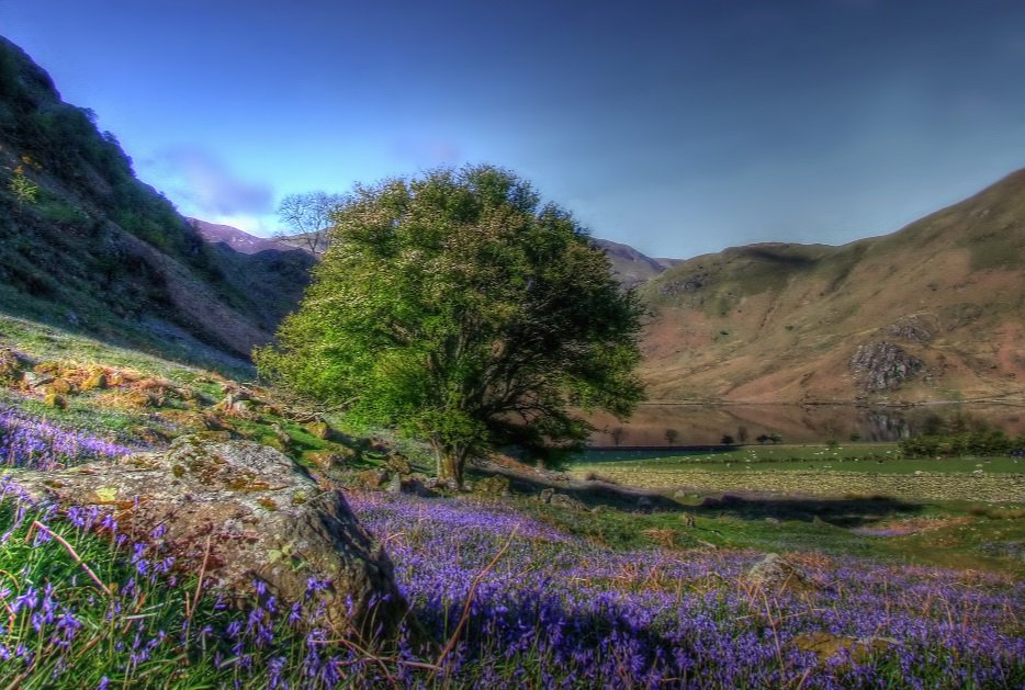 If you're quick you can catch the last of the bluebells at Rannerdale @NTNorthLakes. Bank Hol adventure perhaps? https://t.co/IhtbSlyfeI