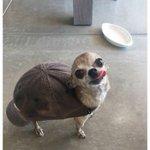 k clase d tortuga es esta? https://t.co/MHXzwwqkuA