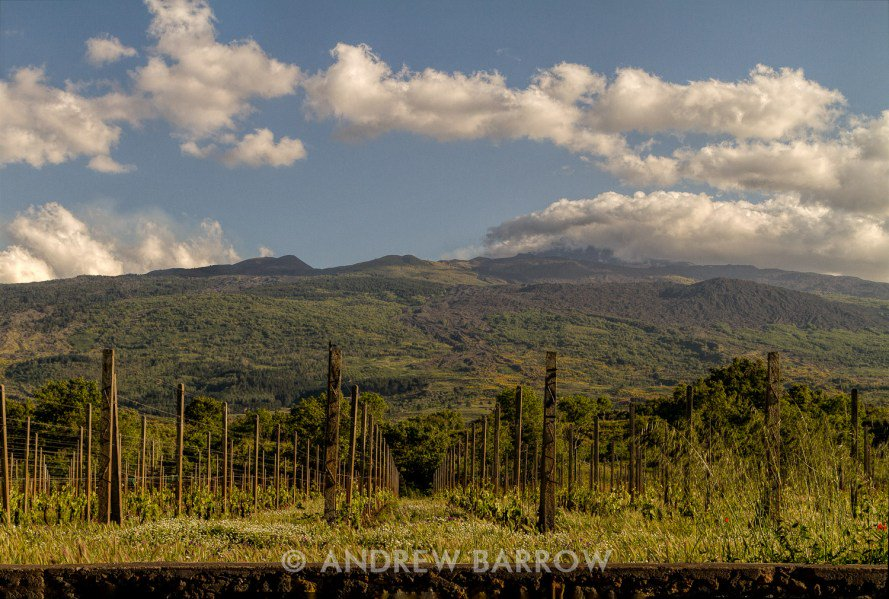 Vines under Mount Etna - https://t.co/rM0x2FYzsw #EsploraSicily #Sicily #wine #winelover https://t.co/R8QyXtaD56