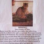 Please help find a Cardiff family find Buster the cat: https://t.co/Z1lg7GfS3d  Please RT  #Penylan #Roath #Cardiff https://t.co/N37Ht03UeJ