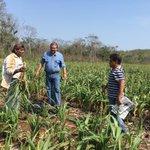 La Dirección de Sanidad e Inocuidad Agrícola mantiene en monitoreo las principales plagas que afectan a los cultivos https://t.co/1dzdnlhvkz