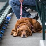The dog days are here. Well, at least for a night. #GoMariners https://t.co/E5cc67rsQY