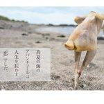 エロい(錯乱) 一糸まとわぬセクシーショット満載、写真集「鶏夏」がビレバンで取り扱い開始 ※ただし全部鶏肉 - ねとらぼ https://t.co/iiYzPWXe14 @itm_nlabから https://t.co/JhxOEc1VZc