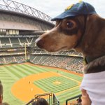 At @Mariners #barkinthepark Go Ms!! #baseball #Mariners #Athletics #SafecoField https://t.co/h146fY2Wk3