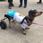Bark in the Park! @Mariners @710ESPNSeattle @TheMikeSalk @DDMon710 #Mariners #barkinthepark https://t.co/YzDrSptslE