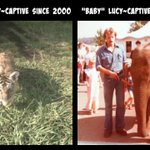 We Are #ROARandRUMBLE Warriors for the RELEASE of @lucyliberte & @TonyTiger2000 to REPUTABLE SANCTUARIES! https://t.co/KxJNq43EXZ