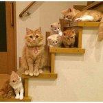 Balik rumah, nampak kucing duduk depan pintu. Okay, apa benda first yg kau buat? https://t.co/MbznYT09XS