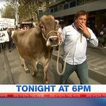 Protesting #Victorian dairy farmers overwhelmed by support from city consumers. @NickMcCallum7 reports in #7NewsMelb https://t.co/FvKnmg7GuO