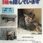 #拡散希望 ベティの看板猫 ポポ♂(5歳)が5月13日午後から行方不明となってます。 本日警察署への届出を行いました。 目撃情報など些細な事でも構いません。宜しくお願い致します。 #七尾 #nanao #迷い猫 #迷子猫 https://t.co/1lxRXpHIQt