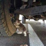 Sebelum nak mula gerakkan kenderaan tolong la 30saat check bawah kereta. RT untuk sebarkan kepada yang bela kucing. https://t.co/EmnTtYDJH9