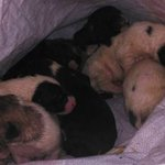 Imputado un hombre en Navarra por abandonar siete cachorros de mastín en un contenedor https://t.co/K0OA0HmXq1 https://t.co/NMWMEuMapC