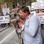 Ben Govett from Dingee kisses his cow, Sary, as dairy farmers march through Melbournes CB… https://t.co/XMnWe5GnPr https://t.co/ktaWvp2uNr