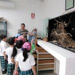6ª #SemanadelaDiversidadBiológica en el #CEDESU con recorridos y actividades de #EducaciónAmbiental #UACAM #Campeche https://t.co/GxiACLV6ax