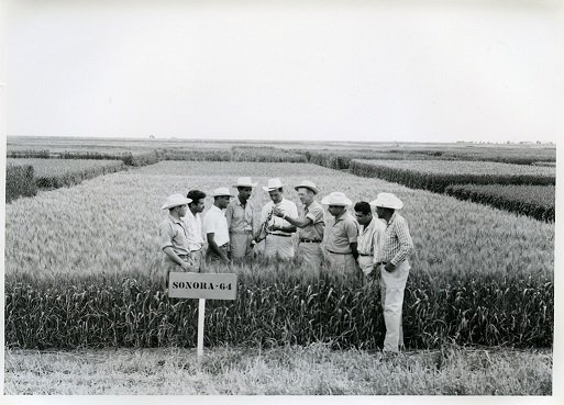 An exhibition to honor Norman Borlaug and mark #CIMMYT50 launches today in #Mexico https://t.co/RIbJ2hrTPo