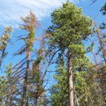 Are you seeing dead or damaged trees as you travel around? Theyre stressed & heres why https://t.co/6ixcZnHnWl https://t.co/I3dI35G8i9