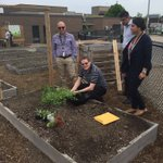 @MohawkCollege Business Solutions dept. are planting peas to grow up their nifty trellis https://t.co/jcUDi0Jaoa